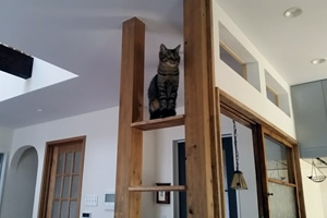 猫が乗れる棚や渡れる梁など、遊べる空間をふんだんに設けた
