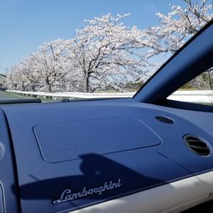 オープンカーで桜の名所を駆け抜けるのは格別