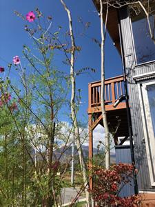 庭師に植えてもらった木々。移住以前は植物に興味はなかったが、今では庭いじりが楽しみに
