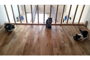 2階のホールは猫がくつろぐリビングに